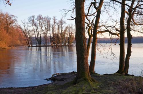 Baumgruppen am zugefrorenen See bei Schloss Krickenbeck 14.02.2018