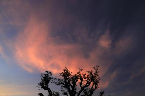 Brennender Nussbaum 10.06.2021