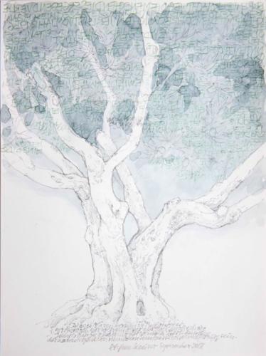 Stefan Kaiser, Dieser Olivenbaum in Puyloubier..., 2018, Bleistift, Farbstift, Aquarell, 30,5 x 22,5 cm