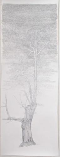 Stefan Kaiser, Himmelsbaum I, 2017, Bleistift, Farbstift, Aquarell, 33 x 85 cm