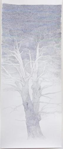 Stefan Kaiser, Himmelsbaum II, 2017, Bleistift, Farbstift, Aquarell, 33 x 75 cm, Privatbesitz