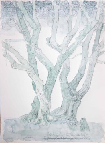 Stefan Kaiser, Olivenbäume in Puyloubier, 2018, Bleistift, Farbstift, Aquarell, 31 x 23 cm, Privatbesitz