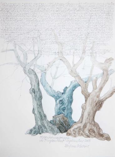 Stefan Kaiser, Olivenbaumgruppe in Puyloubier, 2018, Bleistift, Farbstift, Aquarell, 31 x 23 cm, Privatbesitz
