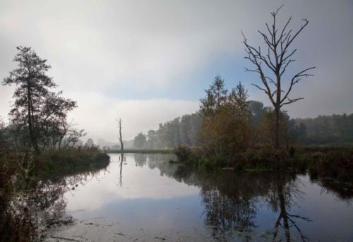 Rohrdommelprojekt, Nebel löst sich auf 18.10.2017