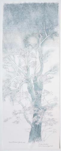 Stefan Kaiser, Himmelsbaum IV, 2017, Bleistift, Farbstift, Aquarell, 33 x 87 cm